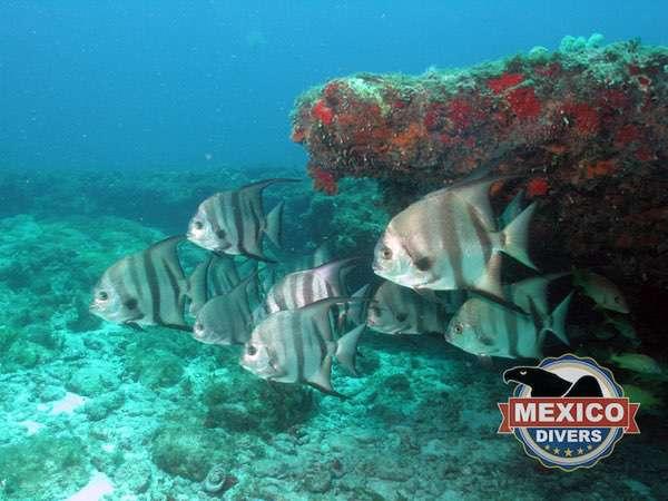 fish at the sleeping shark cave