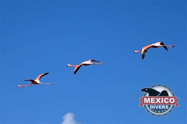 boca iglesia flamingos